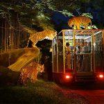 Tempat Wisata Malam di Bali Yang Wajib Dikunjungi